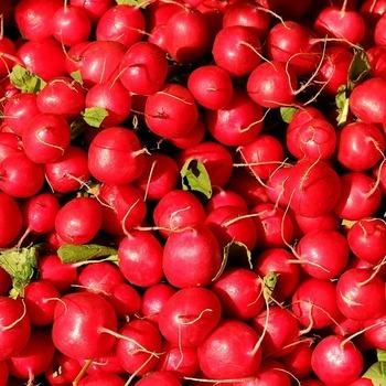 Radijs 'Cherry Bell'