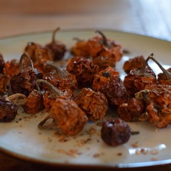 Kannibaaltomaat (Solanum uporo)